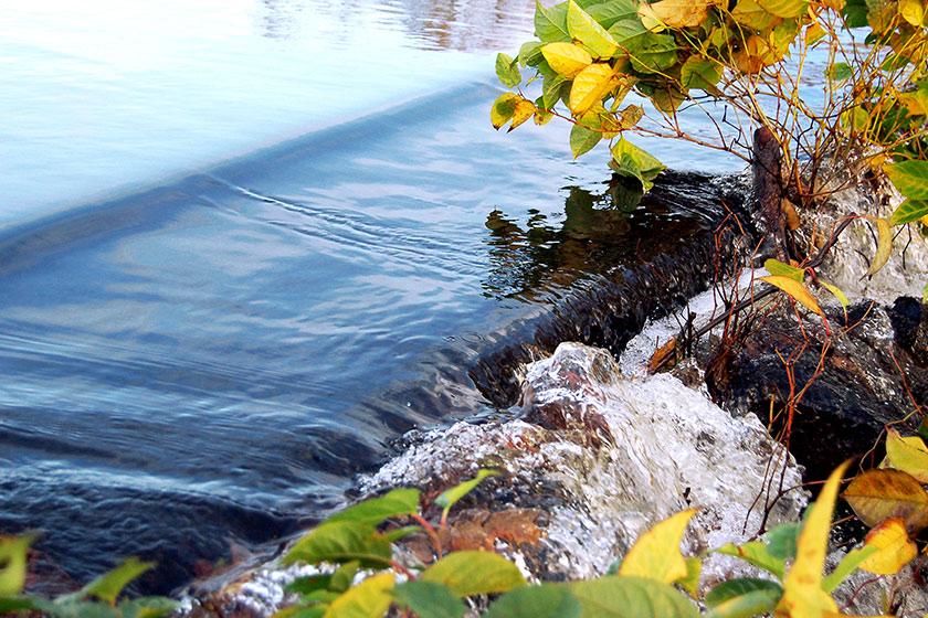vattendrag i början på ett litet vattenfall med gula löv flytande