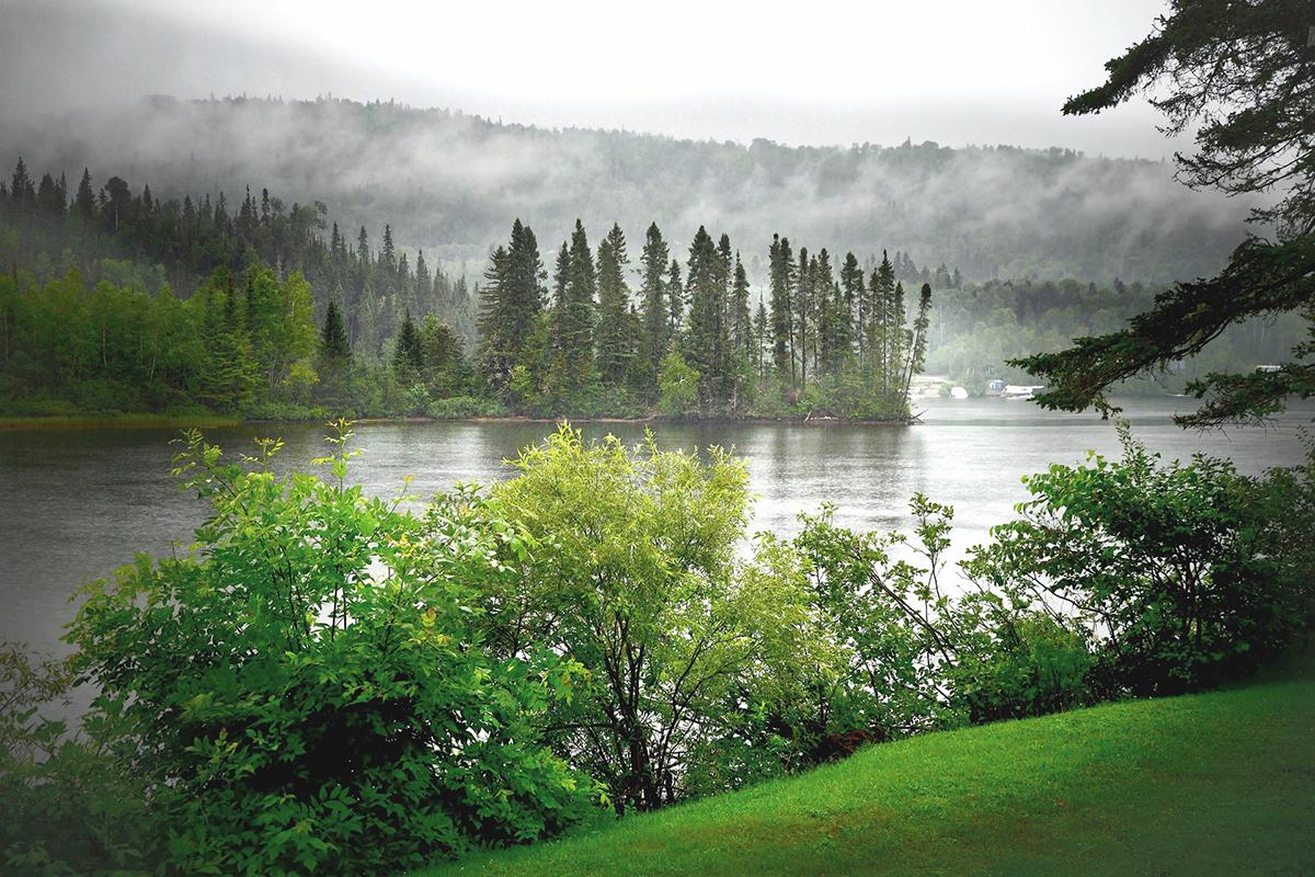 skog i dimman med utsikt över sjö