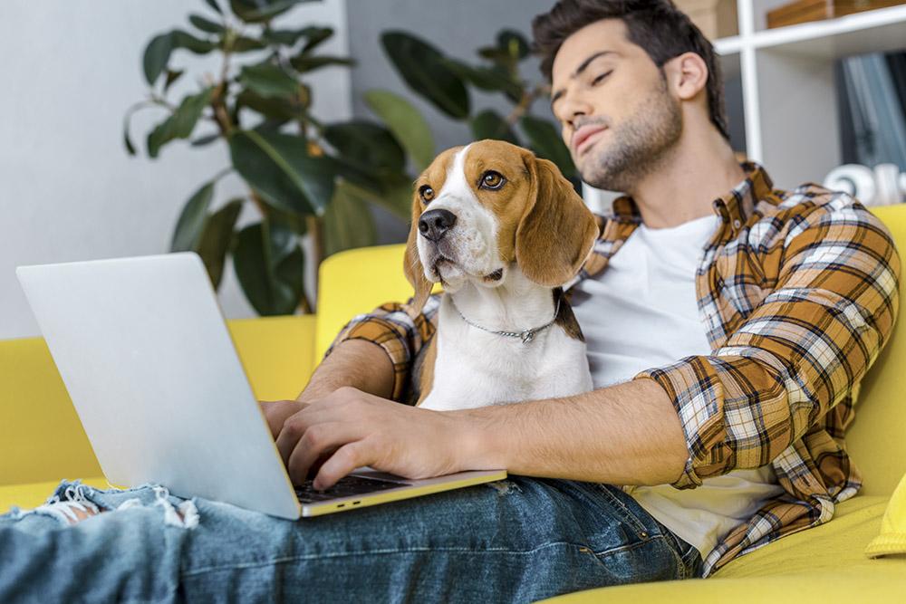 ung man sitter i gul soffa med sin hund och en laptop